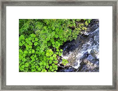 Fish Creek In Summer Framed Print