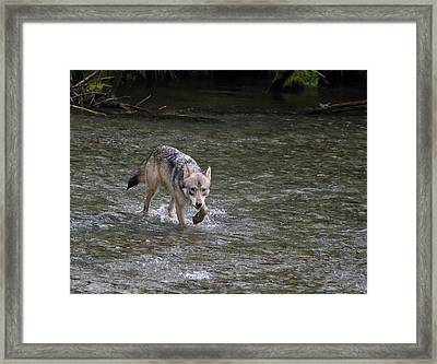 Fish Creek Wolf Framed Print