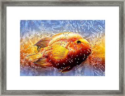 Fish Eggs Framed Print by Barbara Chichester