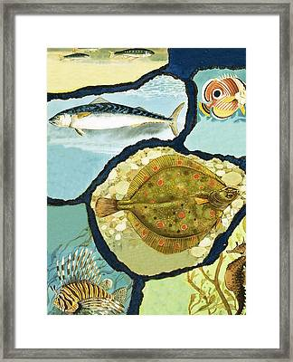 Fish Framed Print by English School