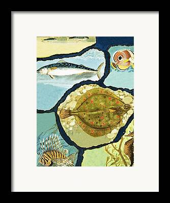 Minnow Pattern Framed Prints