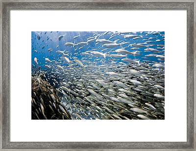 Fish Freeway Framed Print