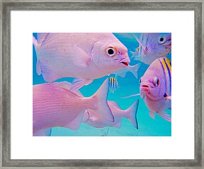 Fish Frenzy Framed Print by Carey Chen