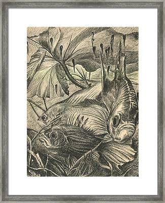 Fish Haven Framed Print