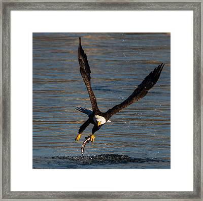 Fish Hook Framed Print by Glenn Lawrence