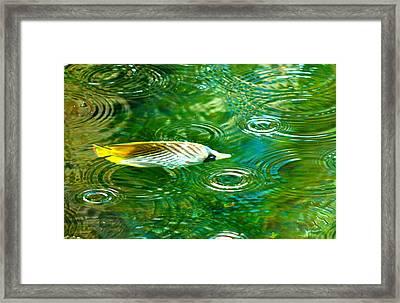Fish In The Rain Framed Print