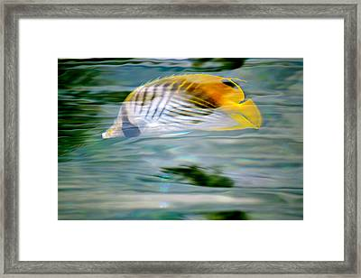 Fish In The Sunlight Framed Print by Lehua Pekelo-Stearns
