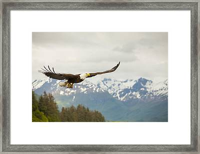 Fish Is On The Menu Framed Print by Tim Grams