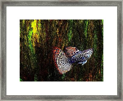 Fish Kingdom Colors  Framed Print by Mario Perez