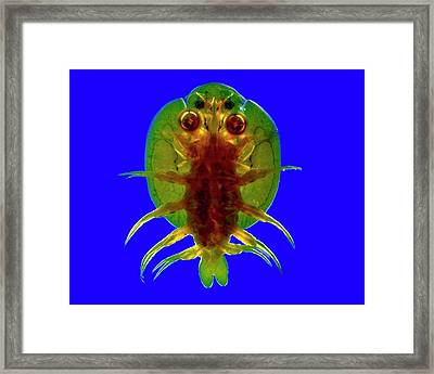 Fish Louse Framed Print by Dr Keith Wheeler