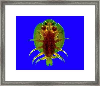 Fish Louse Framed Print