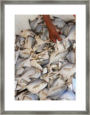 Fish Market Framed Print by Money Sharma