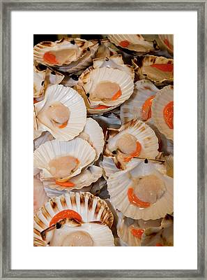 Fish Market Scallops On Display Framed Print by Darrell Gulin