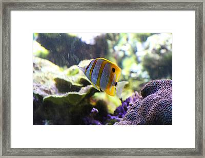 Fish - National Aquarium In Baltimore Md - 1212111 Framed Print by DC Photographer