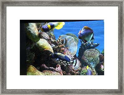 Fish - National Aquarium In Baltimore Md - 1212114 Framed Print by DC Photographer