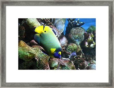Fish - National Aquarium In Baltimore Md - 1212115 Framed Print