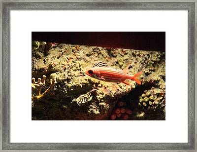 Fish - National Aquarium In Baltimore Md - 1212118 Framed Print by DC Photographer