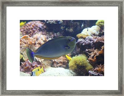 Fish - National Aquarium In Baltimore Md - 1212121 Framed Print by DC Photographer