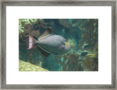 Fish - National Aquarium In Baltimore Md - 1212133 Framed Print