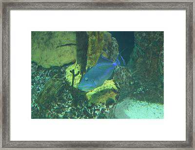Fish - National Aquarium In Baltimore Md - 1212140 Framed Print by DC Photographer