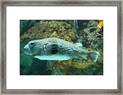 Fish - National Aquarium In Baltimore Md - 1212142 Framed Print