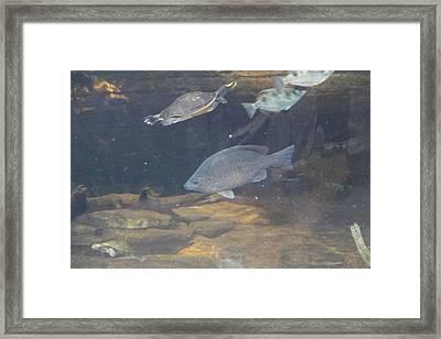 Fish - National Aquarium In Baltimore Md - 1212146 Framed Print