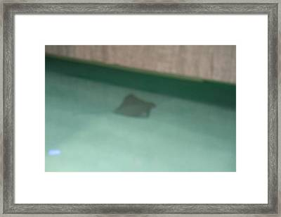 Fish - National Aquarium In Baltimore Md - 12123 Framed Print by DC Photographer