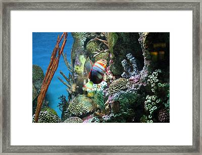 Fish - National Aquarium In Baltimore Md - 121234 Framed Print