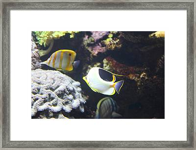 Fish - National Aquarium In Baltimore Md - 121239 Framed Print by DC Photographer