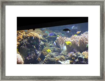 Fish - National Aquarium In Baltimore Md - 121244 Framed Print by DC Photographer