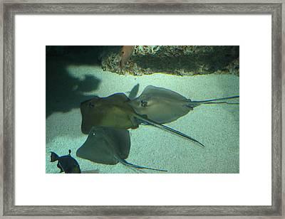 Fish - National Aquarium In Baltimore Md - 121253 Framed Print