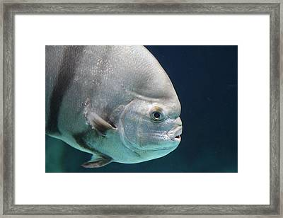 Fish - National Aquarium In Baltimore Md - 121254 Framed Print by DC Photographer