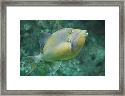 Fish - National Aquarium In Baltimore Md - 121258 Framed Print