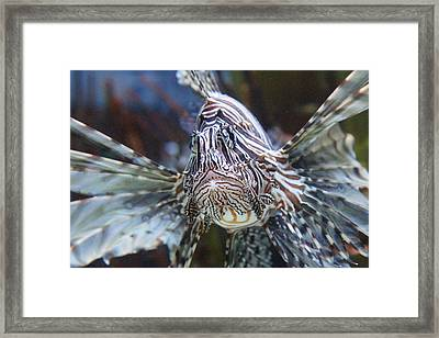 Fish - National Aquarium In Baltimore Md - 121263 Framed Print by DC Photographer