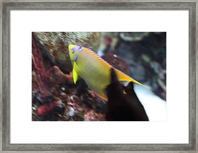 Fish - National Aquarium In Baltimore Md - 121272 Framed Print by DC Photographer