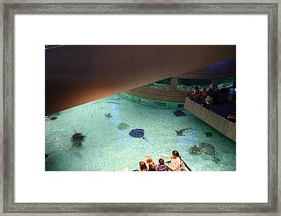 Fish - National Aquarium In Baltimore Md - 121286 Framed Print