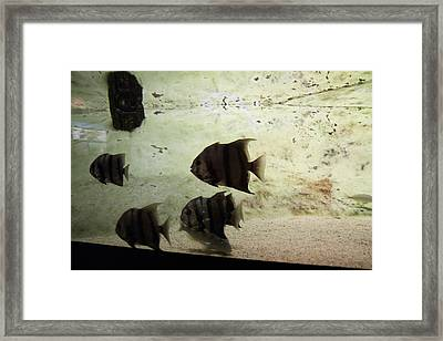 Fish - National Aquarium In Baltimore Md - 121287 Framed Print