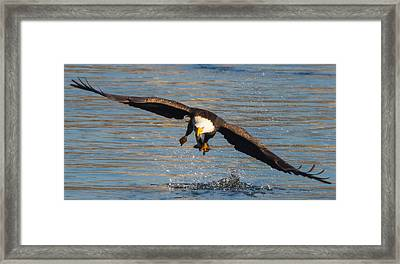 Fish On The Go  Framed Print by Glenn Lawrence