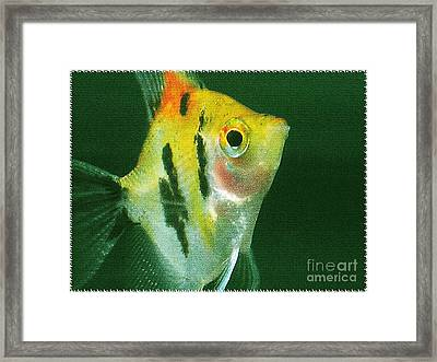 Framed Print featuring the photograph Fish Out Of Water by Nina Silver