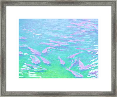 Framed Print featuring the photograph Fish by Rachel Mirror