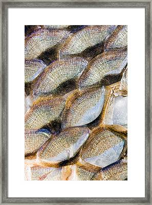 Fish Scales Background Framed Print