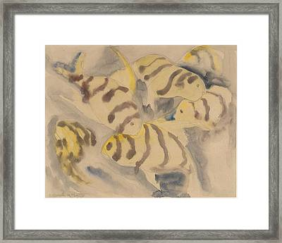 Fish Series, No. 3 Framed Print by Charles Demuth