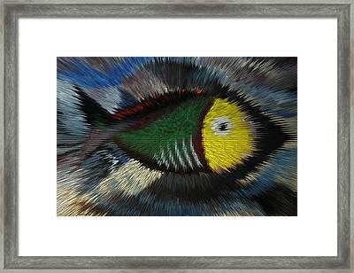 Fish Framed Print by Steve Godleski