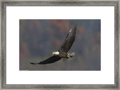 Fish To Go  Framed Print by Glenn Lawrence