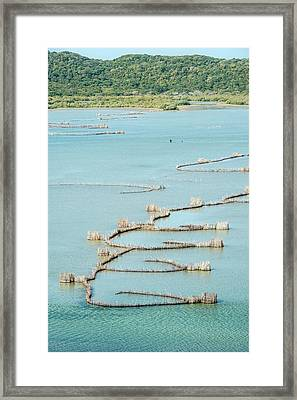 Fish Traps Framed Print by Peter Chadwick