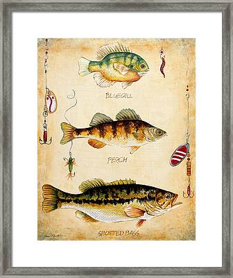 Fish Trio-c Framed Print by Jean Plout