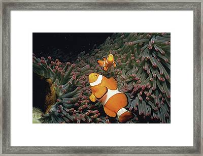 Fish Undersea, Okinawa Prefecture, Japan Framed Print by Panoramic Images