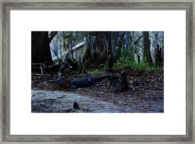 Fisheating Creek 02 Framed Print