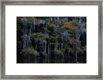 Fisheating Creek 12 Framed Print