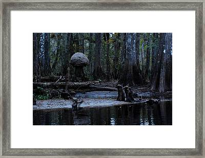 Fisheating Creek 26 Framed Print by Carol Kay